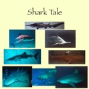 Shark Tale book summary, reviews and download