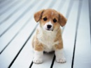 All About Dogs book summary, reviews and download