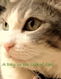 A Day In the Life of Cats book summary, reviews and download