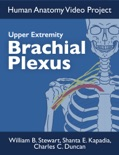 Brachial Plexus book summary, reviews and download