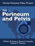 Male Perinuem and Pelvis book summary, reviews and download