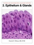 Epithelium & Glands book summary, reviews and download