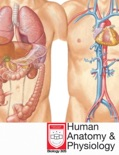 Human Anatomy & Physiology book summary, reviews and download